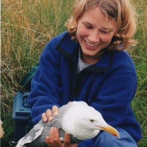 (1998) Stacey holds a glaucas-winged / western hybrid gull she helped capture as part of a study she worked on.