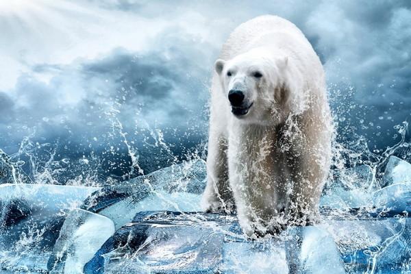 polar bear power animal