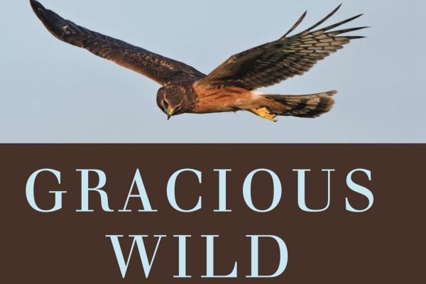 gracious wild review