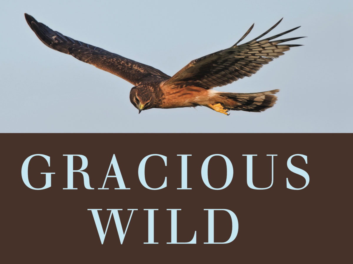 gracious wild review