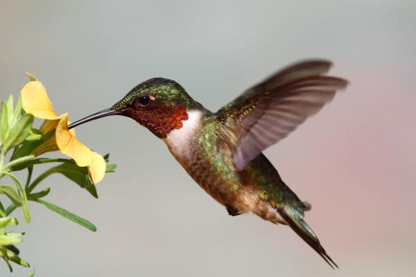 hummingbird totem spirit animal