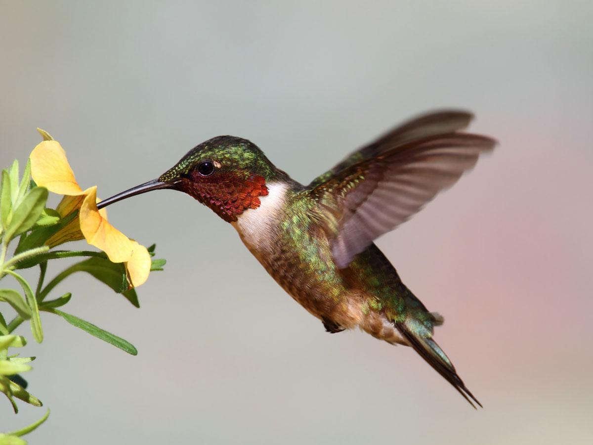 Hummingbird Symbolism Love Joy Wild Gratitude