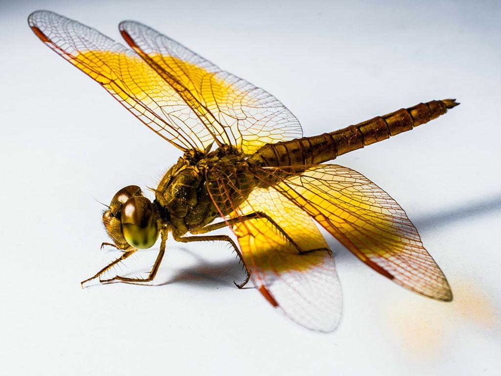 dragonfly symbolism 1024x768 - Wedding Ceremony Meaning