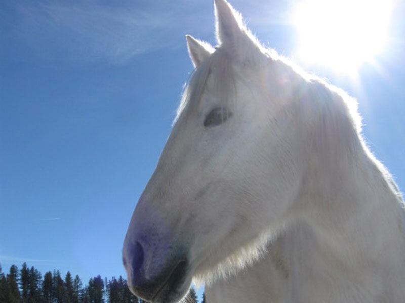 horses shamanism legend purity of heart