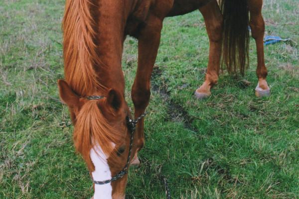 horse gracious wild