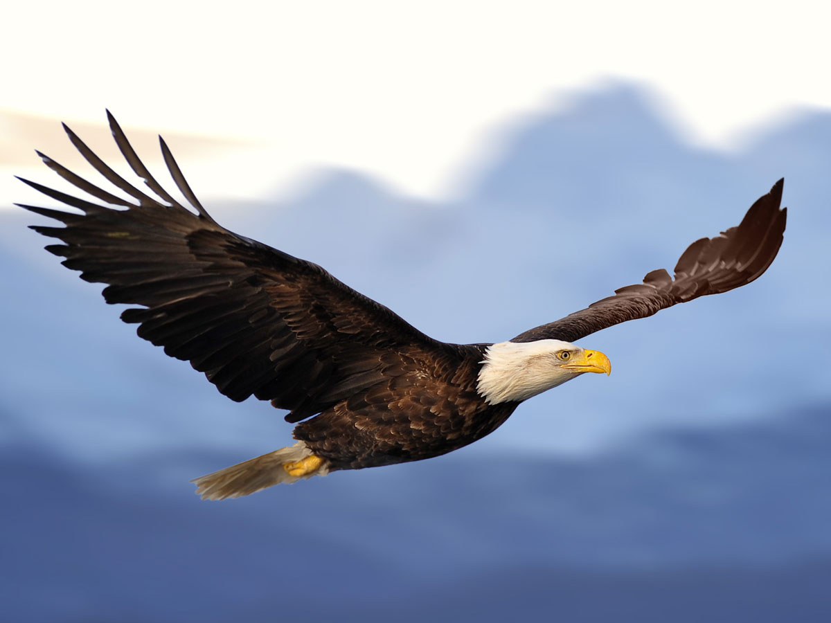meaning of eagle spirit animal