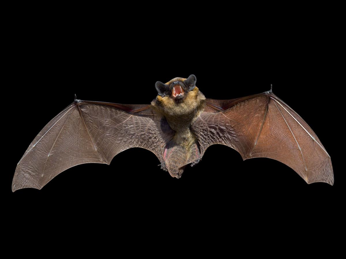bat symbolism