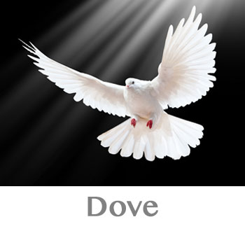 dove spirit animal