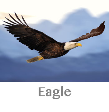eagle spirit animal