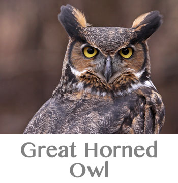 great horned owl spirit animal