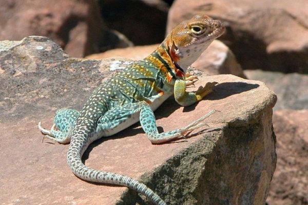 lizard meaning