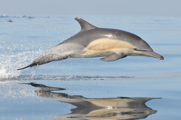 dolphin symbolism