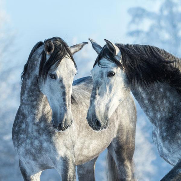 horse workshop